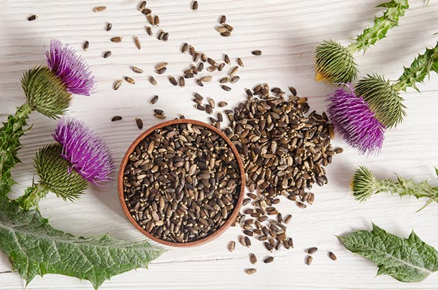 Milk thistle reduces your risk of developing NAFLD