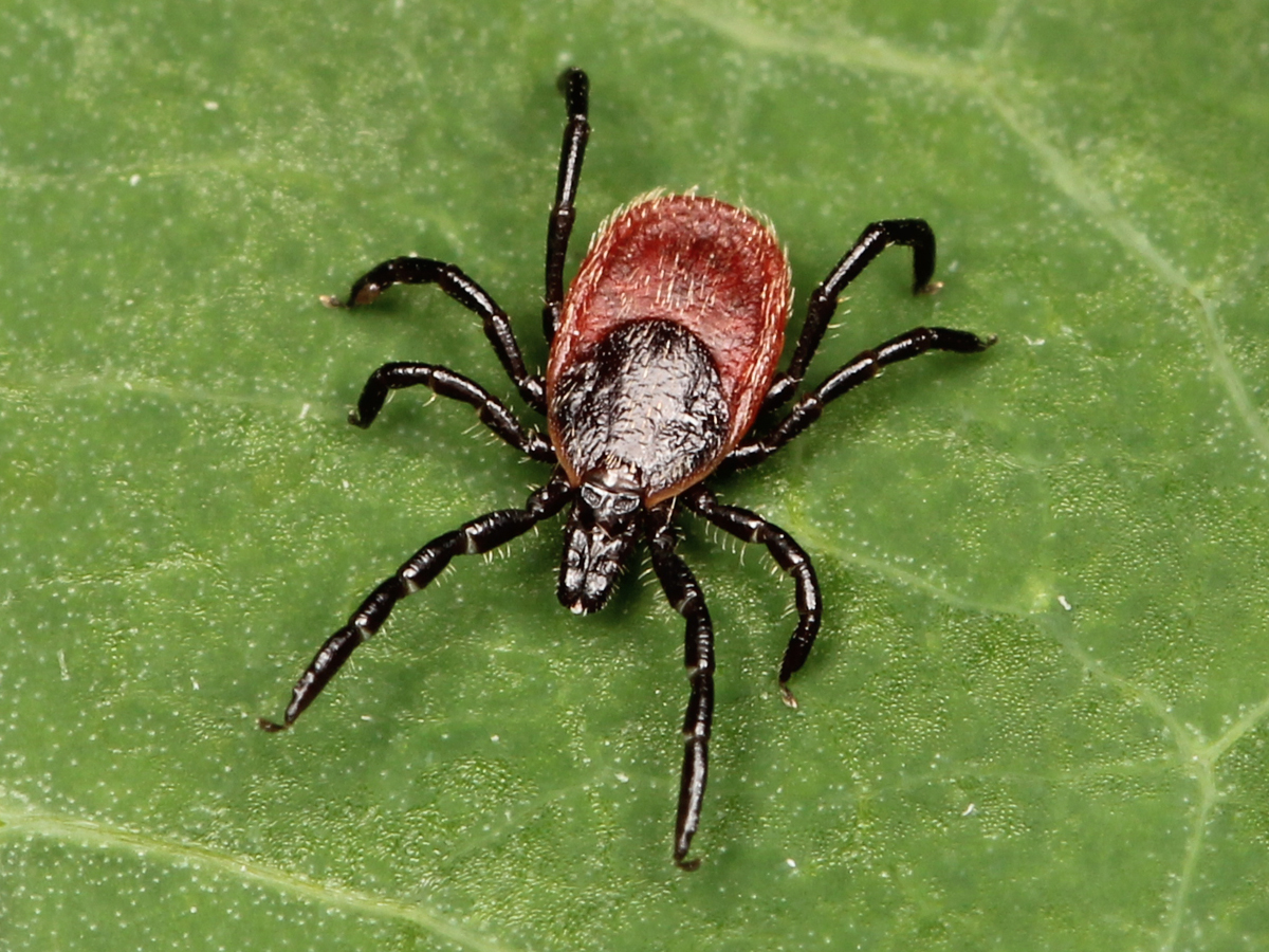 A biocentric approach is key to curing Lyme disease naturally
