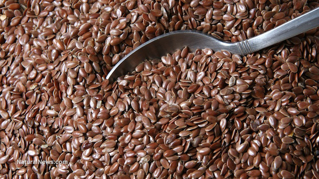 Flaxseeds improve gut health and metabolic health, increase production of beneficial fatty acids