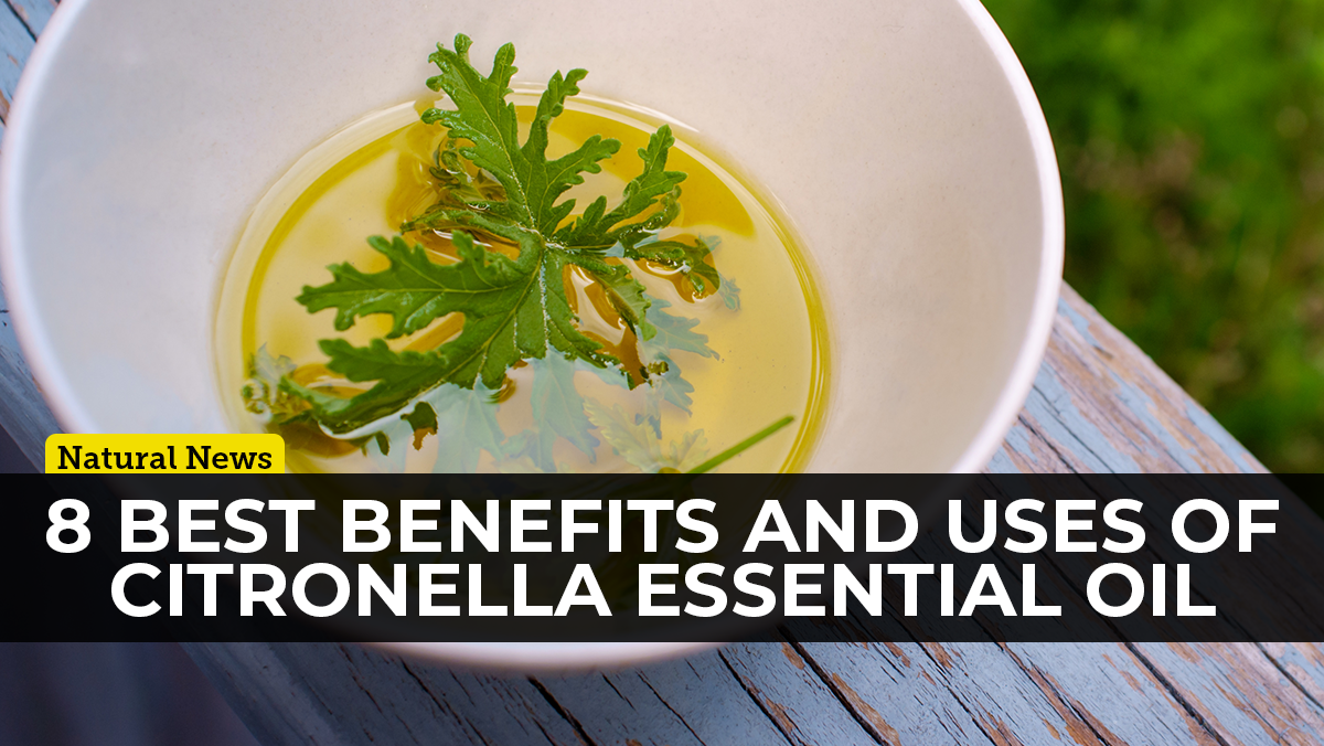 Organic citronella essential oil is one of the most versatile essential oil on the planet