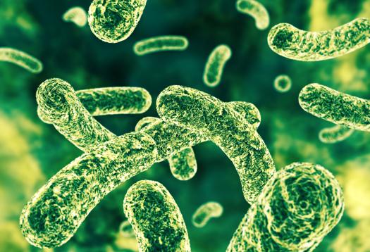 Study reveals marathoners and elite athletes have high levels of gut bacterium that improve exercise endurance